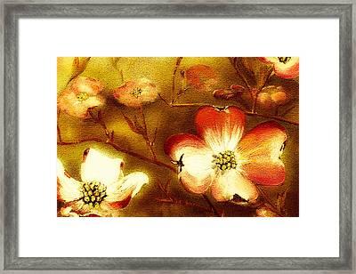 Cherokee Rose Dogwood - Glow Framed Print