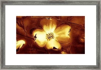Cherokee Rose Dogwood - Single Glow Framed Print by Jan Dappen