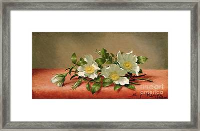 Cherokee Roses Framed Print by Martin Johnson Heade