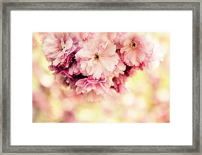 Cherry Amour Framed Print by Jessica Jenney