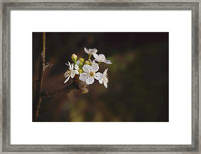 Framed Print featuring the photograph Cherry Blossom by April Reppucci