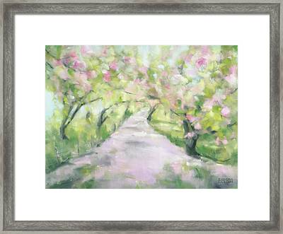 Cherry Blossom Bridle Path Central Park Framed Print by Beverly Brown