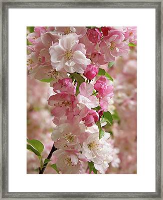 Framed Print featuring the photograph Cherry Blossom Closeup Vertical by Gill Billington