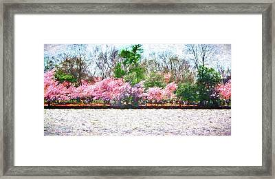 Cherry Blossom Day Framed Print