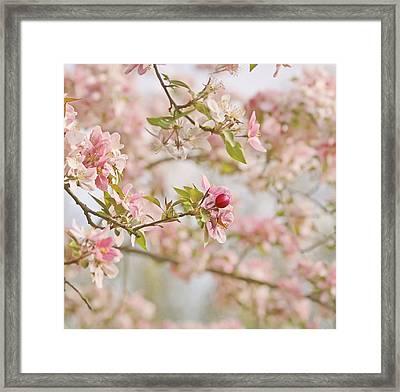 Cherry Blossom Delight Framed Print