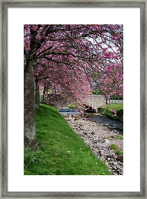 Framed Print featuring the photograph Cherry Blossom In Central Scotland by Jeremy Lavender Photography