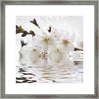 Cherry Blossom In Water Framed Print by Elena Elisseeva
