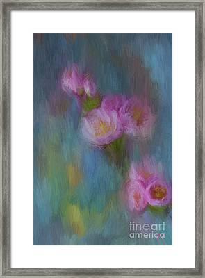 Cherry Blossom Framed Print by Jim  Hatch
