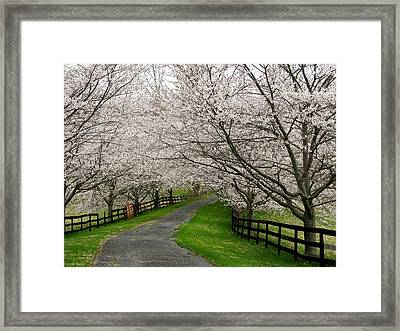 Cherry Blossom Lane Framed Print by Joyce Kimble Smith