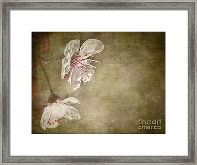 Cherry Blossom Framed Print by Meirion Matthias