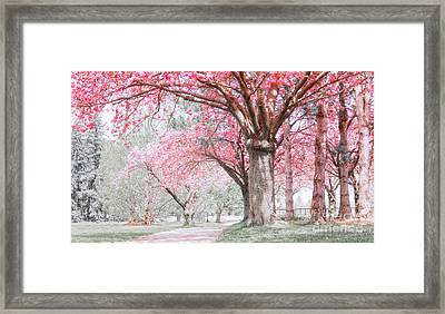 Cherry Blossom Path Framed Print by Charline Xia