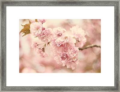 Cherry Blossom Petals Framed Print by Jessica Jenney