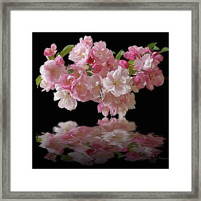 Cherry Blossom Reflections On Black Framed Print by Gill Billington