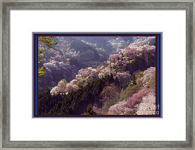 Cherry Blossom Season In Japan Framed Print by Navin Joshi