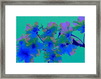Cherry Blossom Series 2 Framed Print by Jen White