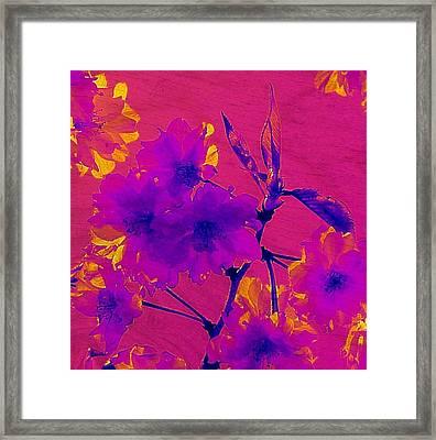 Cherry Blossom Series 3 Framed Print by Jen White