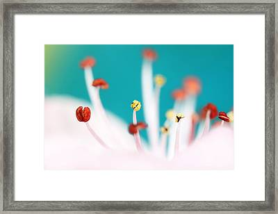 Framed Print featuring the photograph Cherry Blossom by Sharon Johnstone