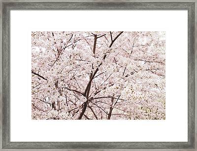 Cherry Blossom Spring Framed Print by Ariane Moshayedi