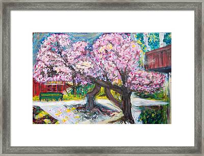 Cherry Blossom Time Framed Print by Carolyn Donnell