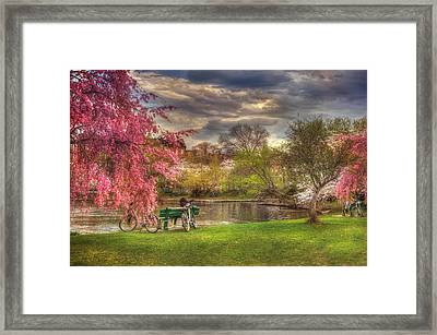 Cherry Blossom Trees On The Charles River Basin In Boston Framed Print