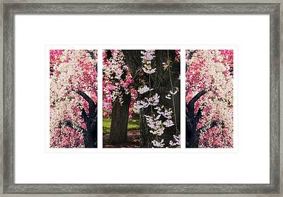 Cherry Blossom Triptych Framed Print by Jessica Jenney