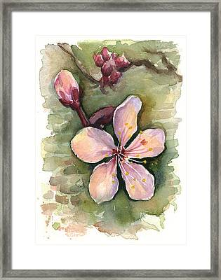 Cherry Blossom Watercolor Framed Print by Olga Shvartsur