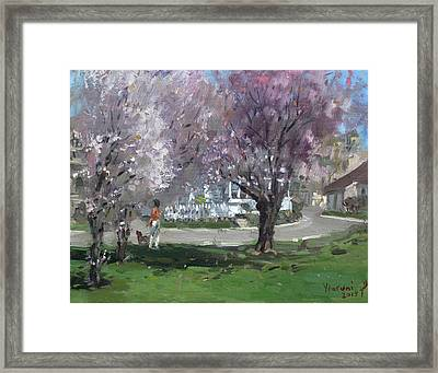 Cherry Blossom Framed Print by Ylli Haruni