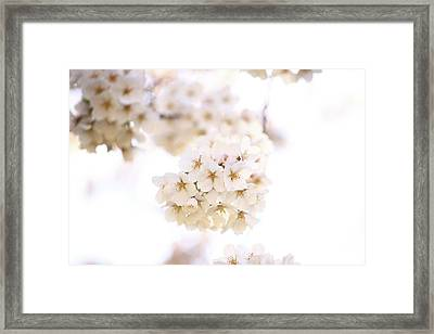 Framed Print featuring the photograph Cherry Blossoms - A by Anthony Rego