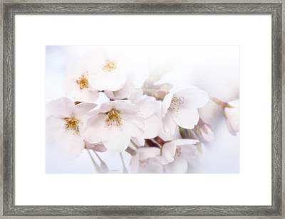 Framed Print featuring the photograph Cherry Blossoms - C by Anthony Rego