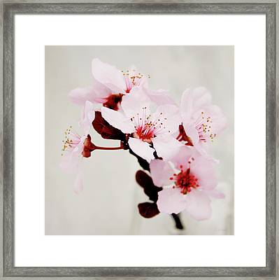 Cherry Blossoms 1- Art By Linda Woods Framed Print