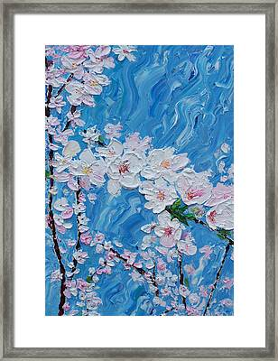 Cherry Blossoms 1 Framed Print by Timothy Clayton