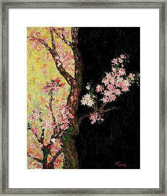 Cherry Blossoms 3 Framed Print by Timothy Clayton