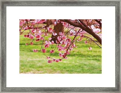 Cherry Blossom Trees Of Branch Brook Park 4 Framed Print by Allen Beatty