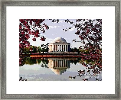 Cherry Blossoms At Jefferson Memorial Framed Print