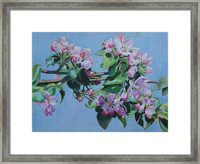 Framed Print featuring the mixed media Cherry Blossoms by Constance Drescher