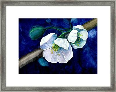 Cherry Blossoms Framed Print by Georgia Pistolis