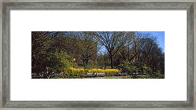 Cherry Blossoms In A Park, Riverside Framed Print by Panoramic Images