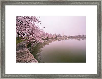 Cherry Blossoms In Fog Framed Print