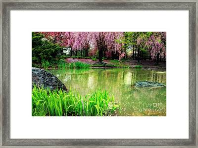 Rain Of Pink Cherry Blossoms Framed Print by Charline Xia