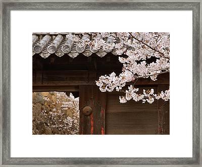 Cherry Blossoms Framed Print by Joe Bonita