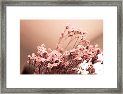 Cherry Blossoms Framed Print by Kendall Tabor