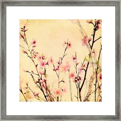Cherry Blossoms Framed Print by Kim Fearheiley