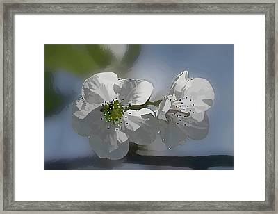 Cherry Blossoms Framed Print by Marti Buckely