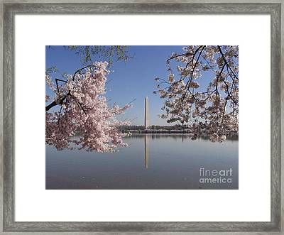 Cherry Blossoms Monument Framed Print by April Sims