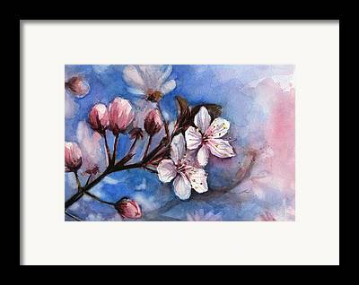 Cherry Blossom Framed Prints