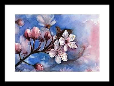 Cherry Blossom Framed Prints