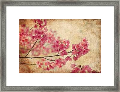 Cherry Blossoms Framed Print by Rich Leighton