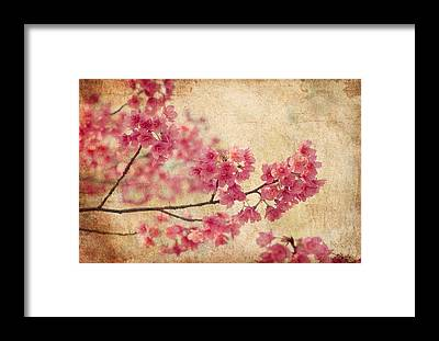 Cherry Blossoms Framed Prints
