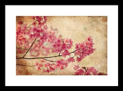 Blossom Framed Prints