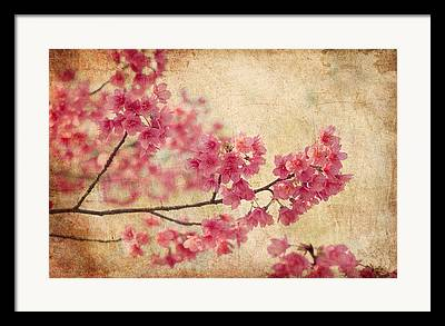 Pink Blossoms Framed Prints